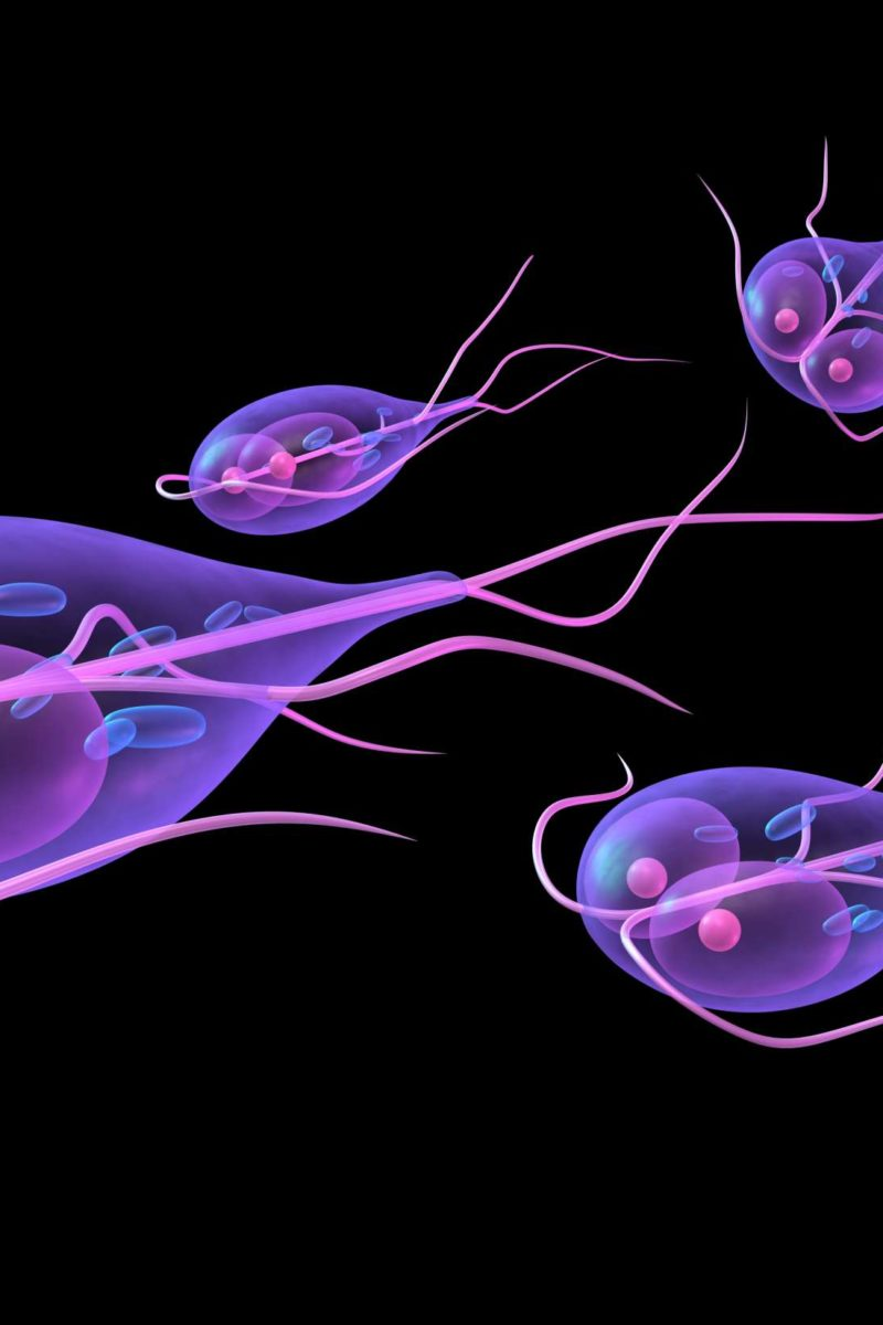 can giardia cause weight loss